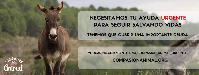 portadacamp_urg